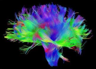 Human Brain Project. Credits: pbs.org