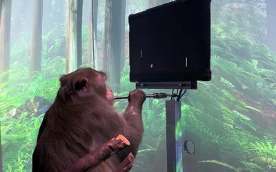 Neuralink, Elon Musk e la scimmia che gioca a Pong con il pensiero