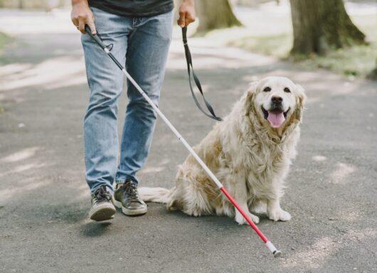 Dalla Berkeley University il primo cane guida robotico su quattro zampe